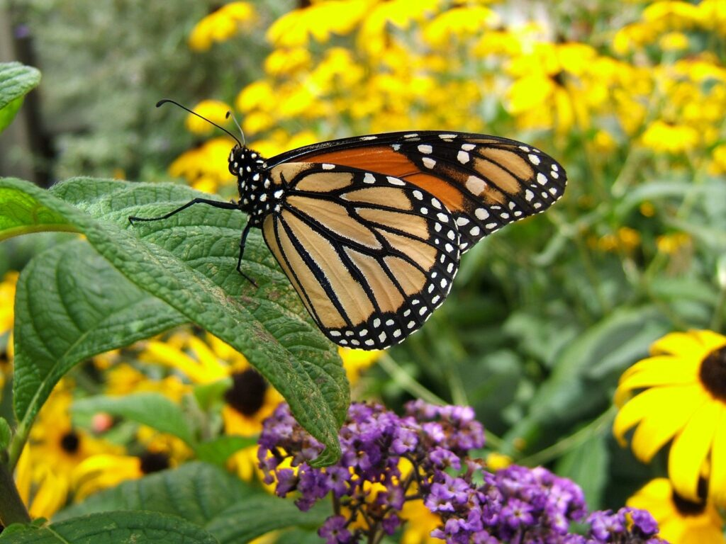 Florida Butterfly Garden | Landscape By Design | St ...